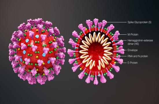 Greek doctors discover mechanism leading to coronavirus pneumonia