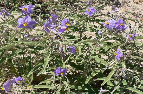 Invader plant species spreads and threatens protected areas in Greece