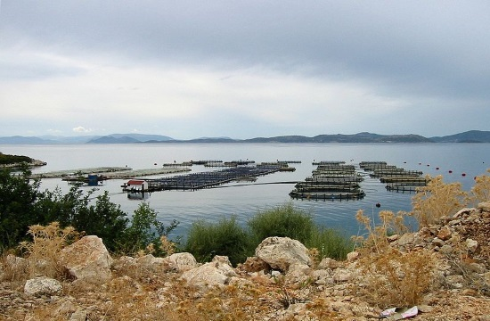 Fall in fish farming output will trigger price rebound in Greece