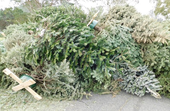 Northern Greek city of Thessaloniki to offer Christmas tree recycling program