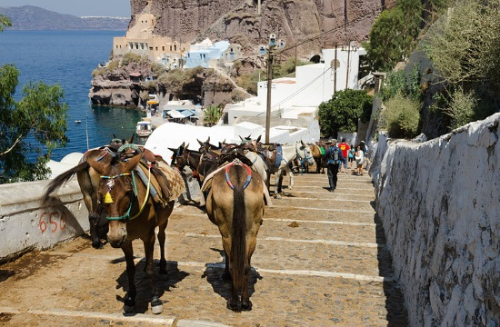 Campaign against overworking of donkeys on Greek island of Santorini