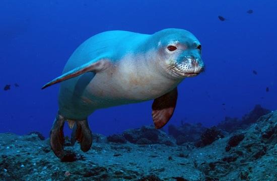 Archipelagos Institute creating sanctuary for marine animals in Greece