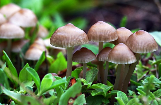 Environment Ministry: First legal framework for Greek mushrooms