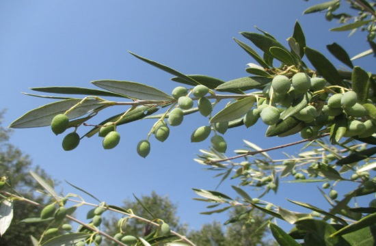 Tornos News | Window on Greek olive oil world marks 3rd anniversary
