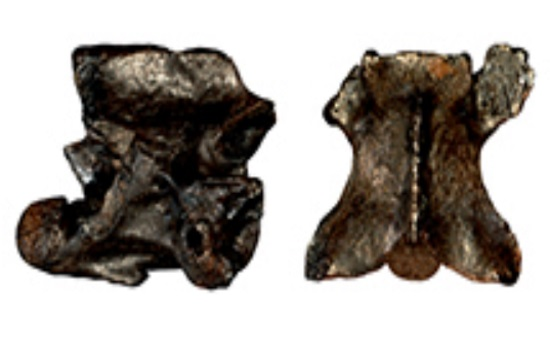 Two six-million-year old new species of snakes found in northern Greece