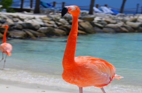Lead shot used by hunters a deadly threat for flamingos in Halkidiki of Greece