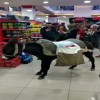 Turks go shopping with donkey to protest plastic-bag charge in market