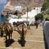 Tourists on Santorini island urged to take the steps instead of riding donkeys