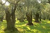 Νew study: Health benefits from including Kalamata olives in diet
