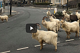 AP: Goats invade locked-down town in North Wales (video)