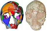 210,000-year-old human skull found in Greece is the oldest fossil outside Africa