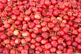 Greek exports of cherries and water melons rise strongly in January-July