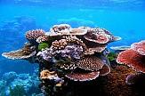 """AP report: Australia lowers Great Barrier Reef outlook to """"very poor"""""""