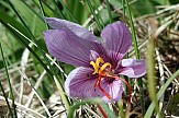 First export of Kozani saffron ready to ship from Greece to China