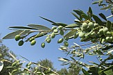 Window on Greek olive oil world marks 3rd anniversary