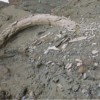 Massive prehistoric tusk discovered at Florina mine in Northern Greece