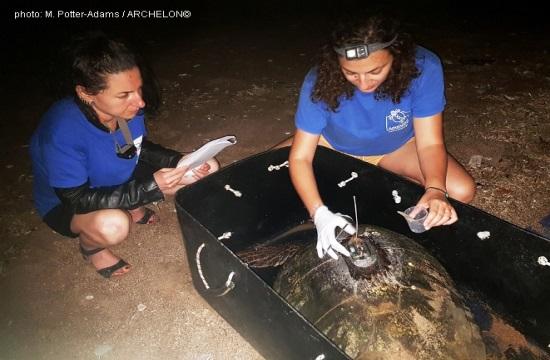 Δορυφορικοί πομποί σε θαλάσσιες χελώνες