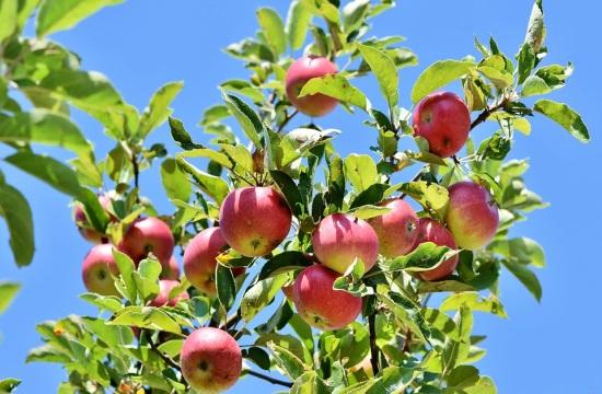Γιορτή Μήλου στη Λάρισα