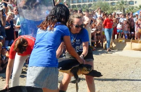 Επανένταξη θαλάσσιας χελώνας στα Κρητικά νερά