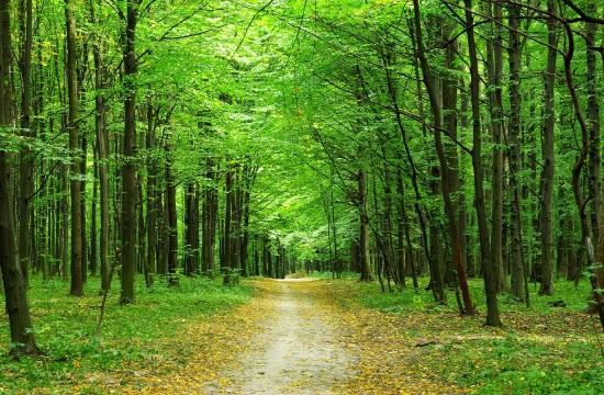 Τροπολογία για τους δασικούς χάρτες