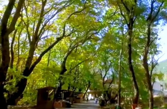 Πλανητερό: Ο παράδεισος των πλατάνων στην Ελλάδα