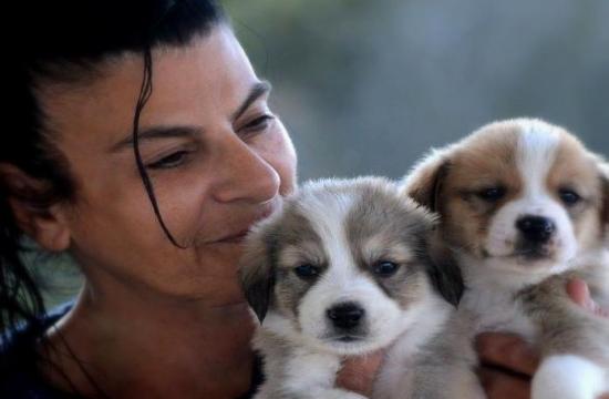 Αφιέρωμα στο Never Walk Alone | Μαρίκα Καμάρη: Μια γυναίκα φύλακας άγγελος για χιλιάδες αδέσποτα σε όλη την Ελλάδα