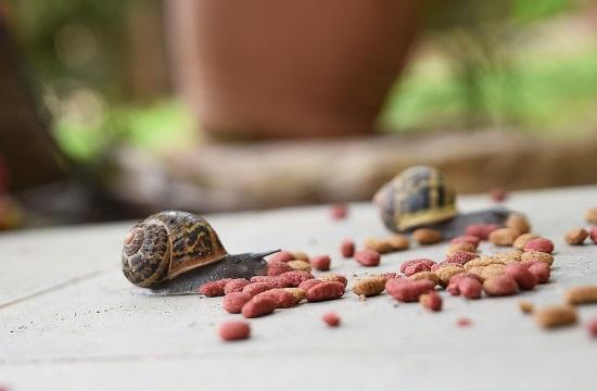 Slow Food: To αντίπαλο δέος του Fast Food στην γαστρονομία