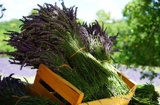 1η Πανελλήνια Έκθεση Αρωματικών και Φαρμακευτικών Φυτών