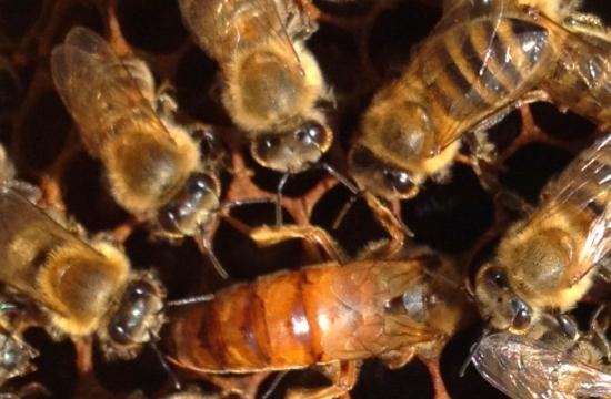 Οι τουρίστες ζητούν κρητικό μέλι στα ξενοδοχεία ... και δε βρίσκουν!
