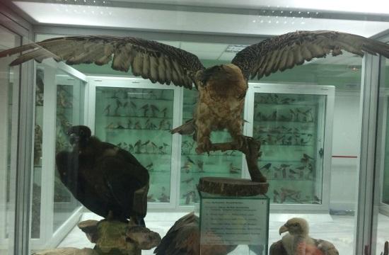 Το Μουσείο Φυσικής Ιστορίας στο Μαρούσι γίνεται διαδραστικό