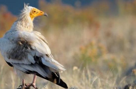 Η Ελλάδα υποψήφια για ευρωπαϊκό βραβείο Natura 2000- Ψηφίστε την!