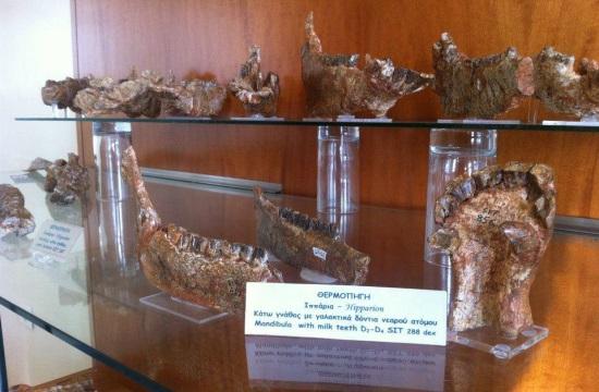 Δήμος Σιντικής: Παραχώρηση της χρήσης του Μουσείου Παλαιοντολογίας Θερμοπηγής