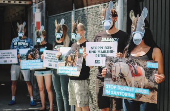 Διεθνής κατακραυγή για την τουριστική εκμετάλλευση των γαϊδουριών στη Σαντορίνη