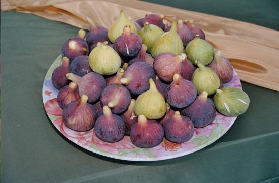 Γιορτή Σύκου στη Μεσσηνία