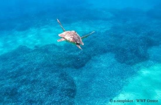 Γιορτή της θαλάσσιας χελώνας στη Γλυφάδα