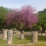 Η Unesco και το National Geographic προβάλλουν την Αρχαία Ολυμπία