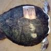 Αποκεφαλισμοί θαλάσσιων χελωνών στη Νάξο!