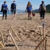 Πρώτη φωλιά θαλάσσιας χελώνας Caretta caretta στον Κυπαρισσιακό