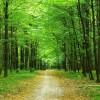 Μέτωπο κατά των δασικών χαρτών από φορείς, Περιφέρειες και Δήμους