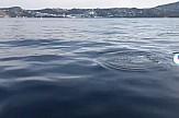 Κοπάδι από μικρά δελφίνια μάγεψαν τη Μύκονο με τα παιχνίδια τους