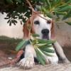 Όλα όσα πρέπει να γνωρίζετε για διακοπές με τον σκύλο σας