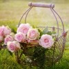 Γιορτή Άνοιξης και Λουλουδιών στην Ανάβρα της Λάρισας