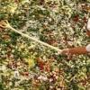 Ελληνική σαλάτα 20 τόνων στη Μόσχα: Διαβάστε τη ...συνταγή