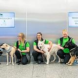 Σκύλοι εντοπισμού κορωνοϊού στο αεροδρόμιο του Ελσίνκι