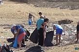 Kαθαρισμός της παραλίας Φτελιάς στη Μύκονο