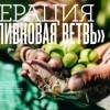 Η ελιά της Χαλκιδικής στο «μενού» 3,5 εκατομμυρίων Ρώσων αναγνωστών