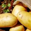 Γιορτή της πατάτας στη Λεκάνη Καβάλας