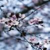 Τουρισμός Λουλουδιών και Δέντρων τώρα και στην Ελλάδα