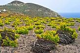 CNN: Στα καλύτερα 15 μονοπάτια κρασιού στον κόσμο η Σαντορίνη