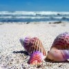 M. Κόνσολας: Εμπόδια στις εγκαταστάσεις αετοσανίδας στις παραλίες